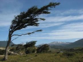 Notas al viento